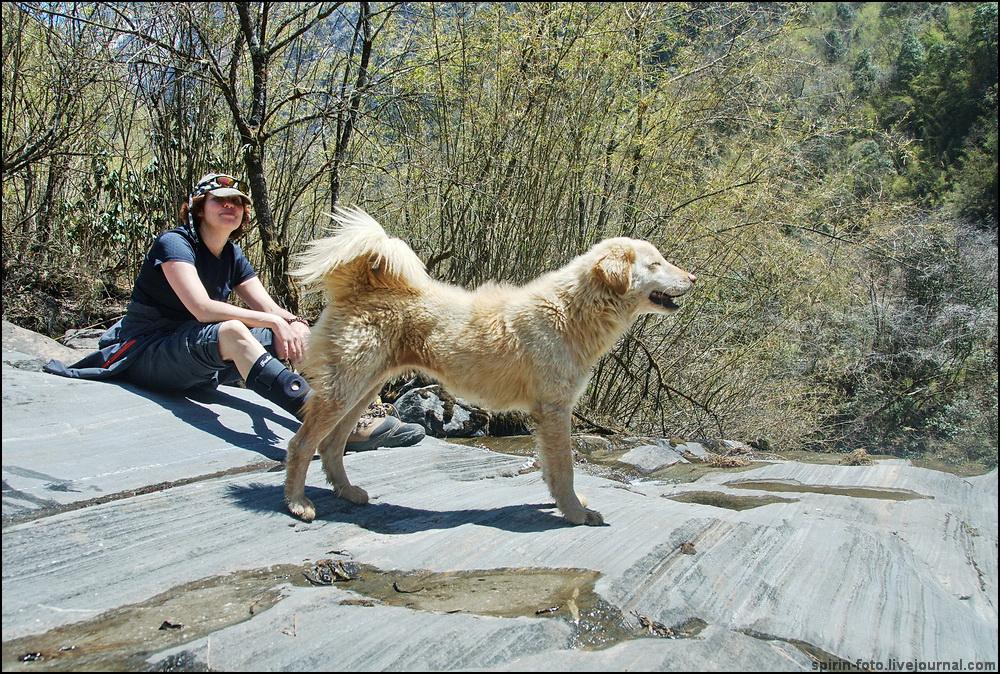 _DSC5851 лена с собакой