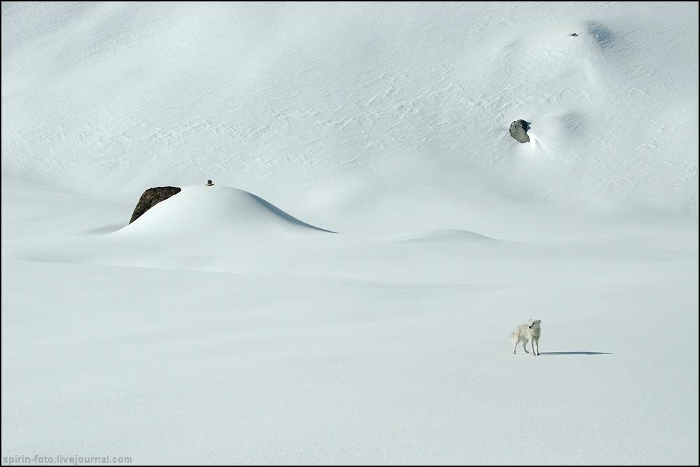 _DSC5956 белый пес
