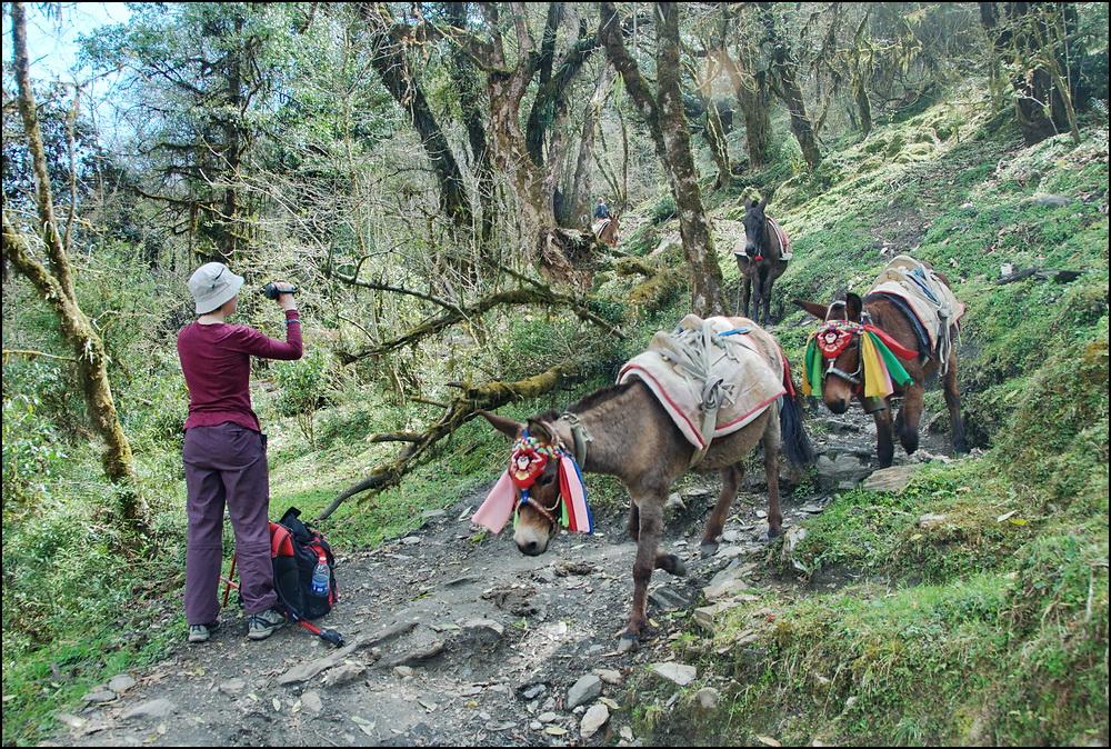 _DSC6056 ира и мулы