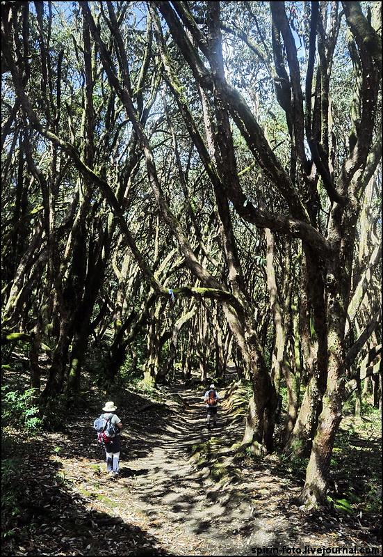 _DSC5230 тропа в лесу