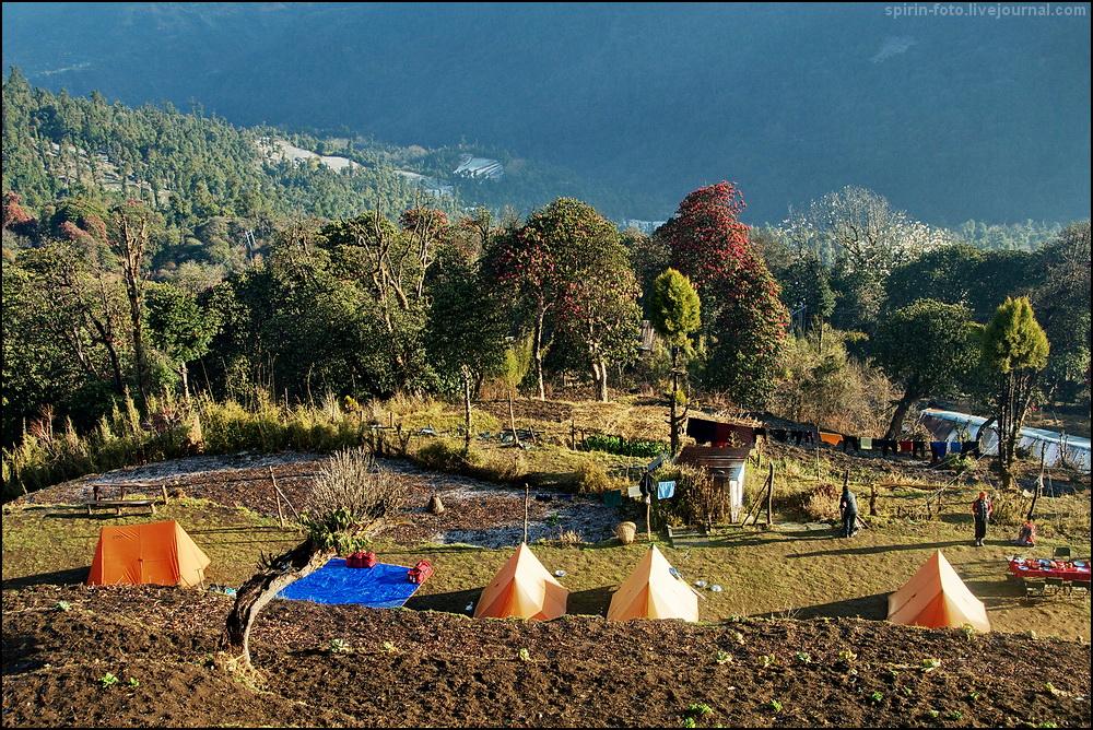 _DSC5464 рододендроны и палатки