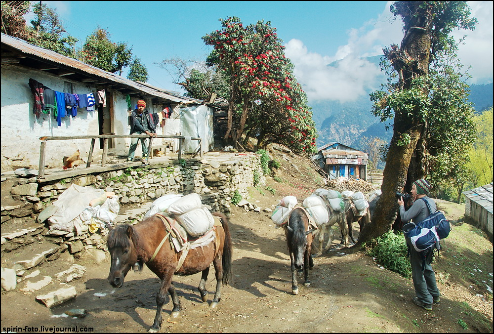 _DSC5467 валера и лошади