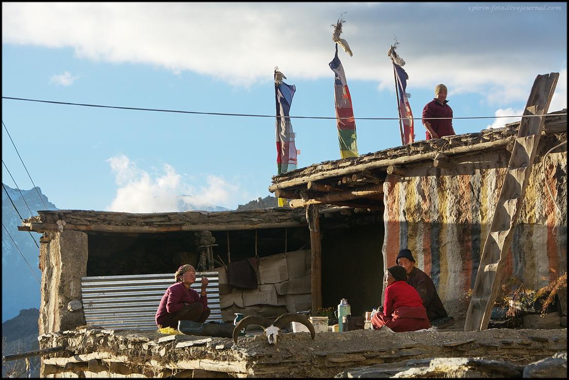 DSC_1294 жители на крыше