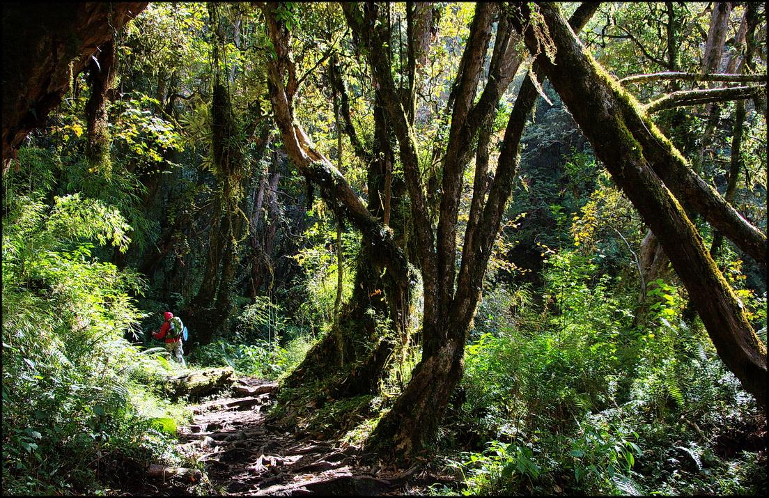 DSC_1822  в лесу