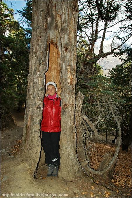 _DSC7791 оля в дереве