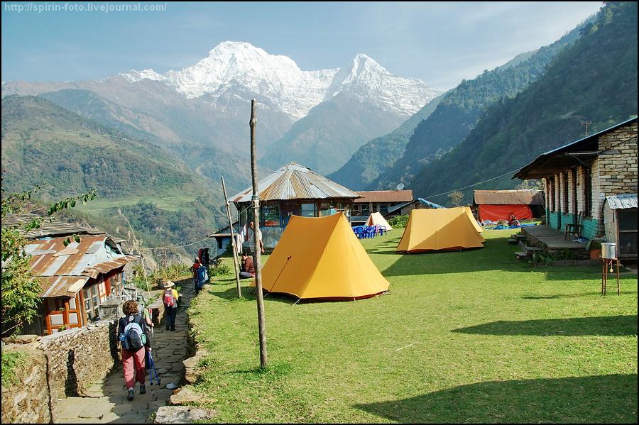_DSC8989 желтые палатки