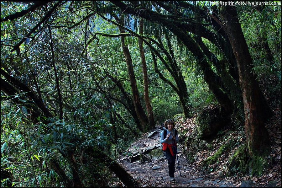 _DSC9018 катя в лесу