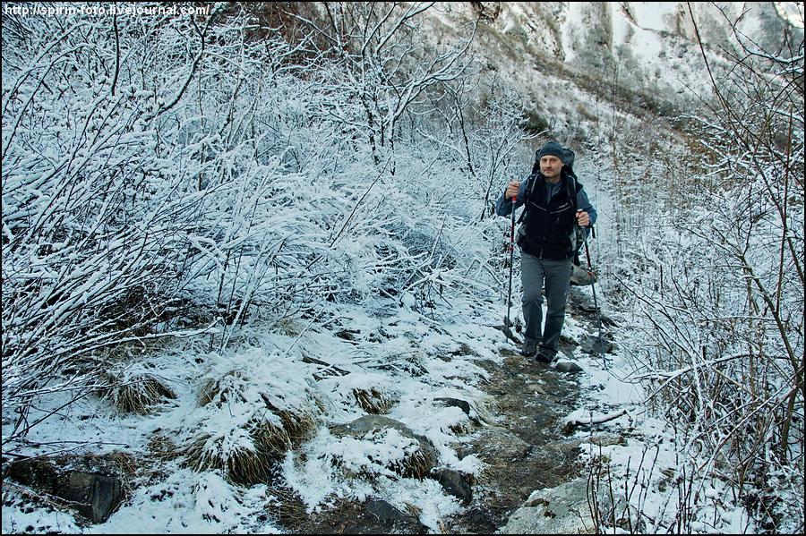 _DSC9074 сквозь снежные кусты