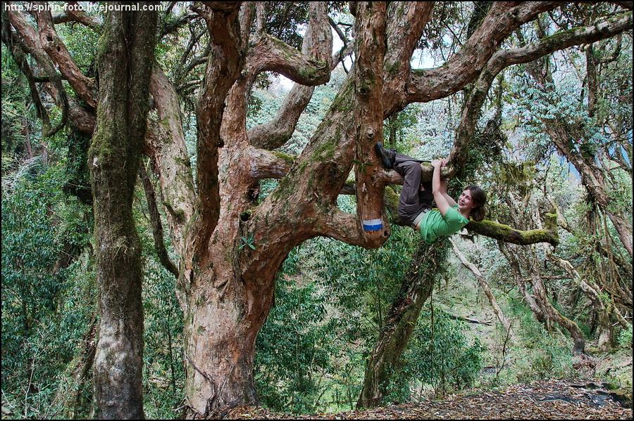 _DSC9241 маша на дереве