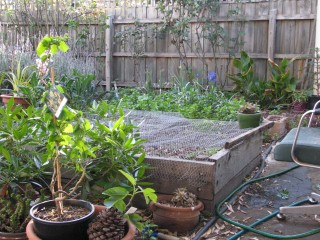 My 'cut and come again' garden.