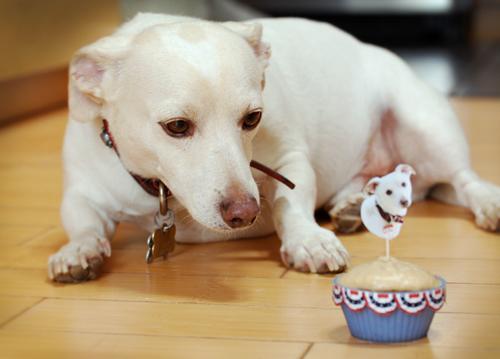 doggie-cupcakes3