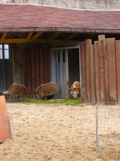02_07_05-zoo-15.jpg
