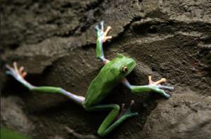 Притча о лягушке на вершине горы