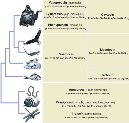 Гены управляют поведением, а поведение — генами