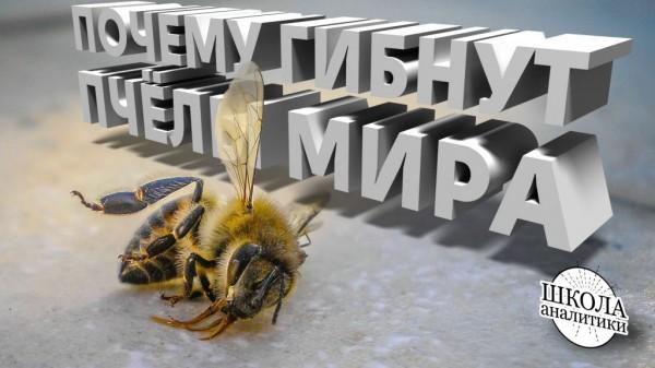 Гибель пчёл на планете — случайность или закономерный результат деятельности людей?