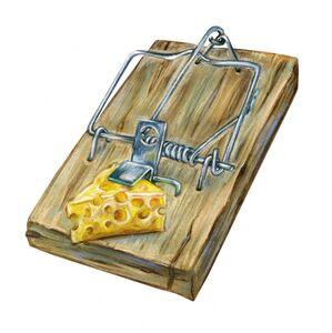 """Сорта сыра в """"человеколовке"""""""