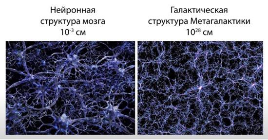 Мозг и Метагалактика