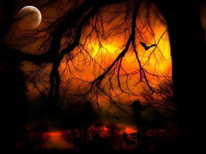 9ab8b0ad64da361bff29d406df8abe51--family-halloween-halloween-night