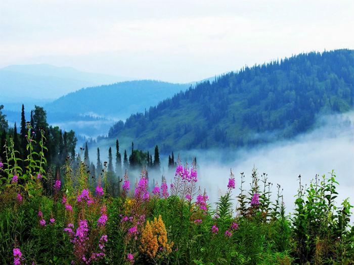 Russia_Siberia_Alatau_Hill_Fog_Shrubs_534957_1600x1200