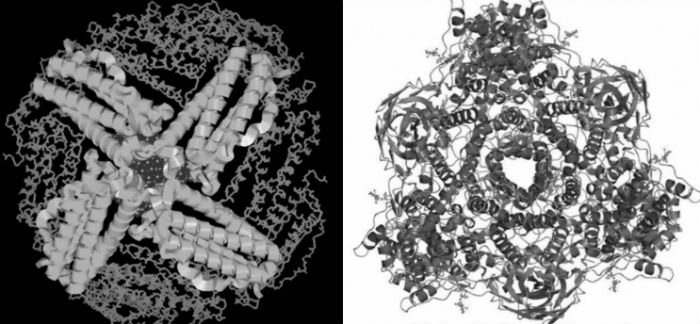 Структура молекулы