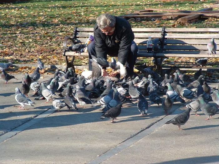 Красный проект. Покорми голубей