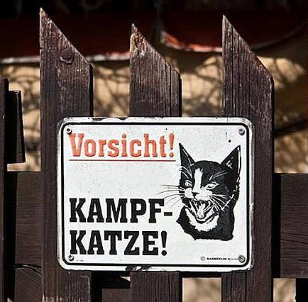 Kampf-Katze