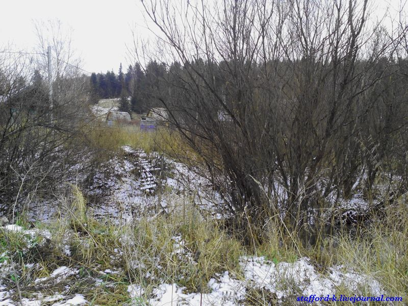 Мост в кустах 2