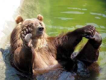 Превед! Это я, медвед