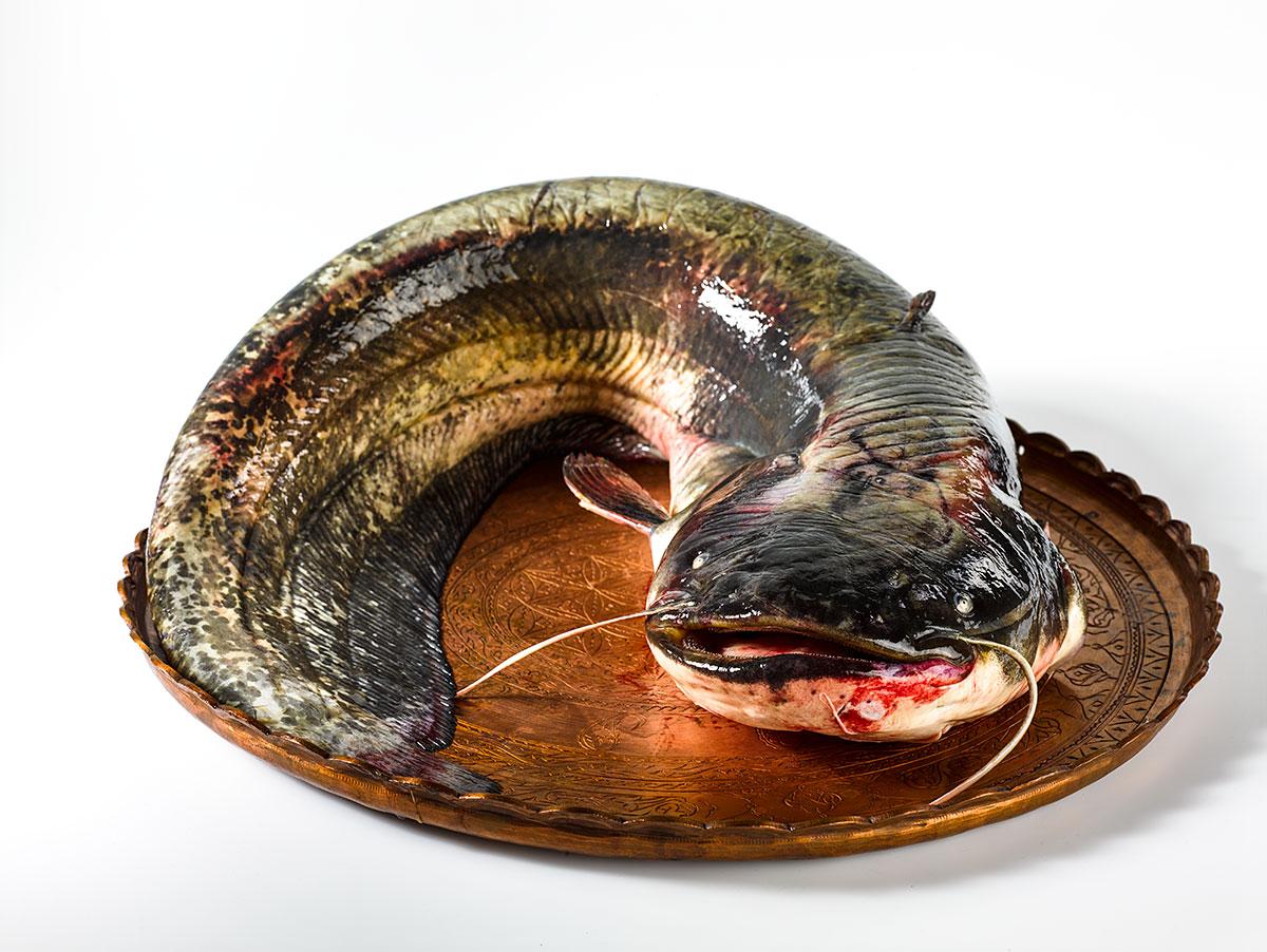 fish-plov6039