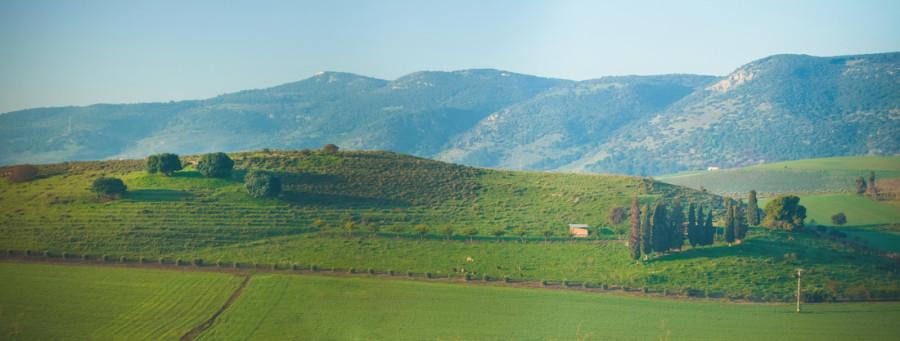 Израильская   Тоскана.