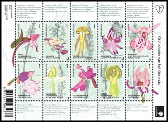 Нидерланды орхидеи