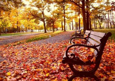 a-autumn_bench-961516