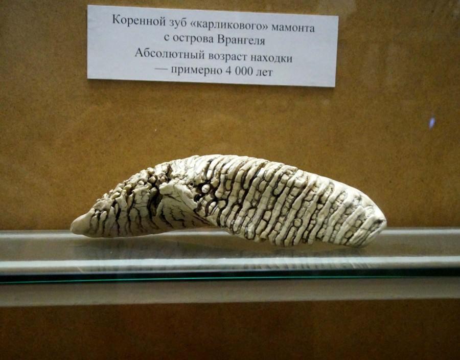 можно музей палеонтологии в санкт петербурге фото руках волнистые