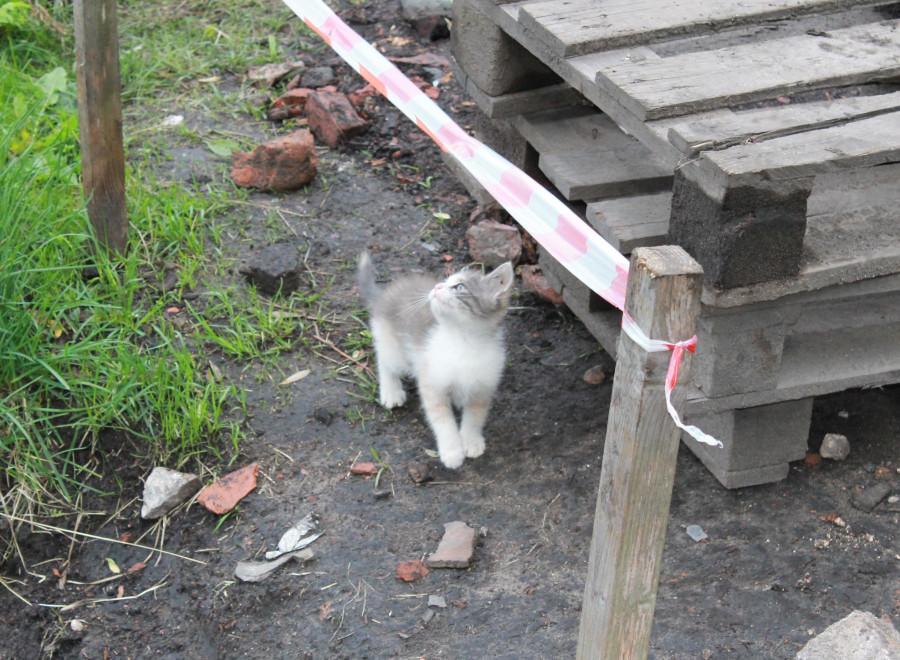Котёнок пришёл на раскоп