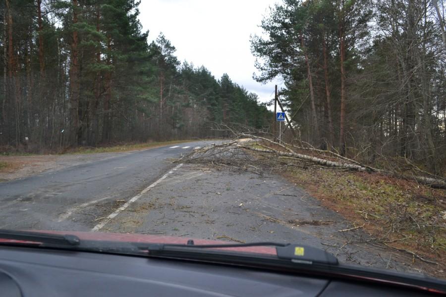 Дерево упавшее на дорогу