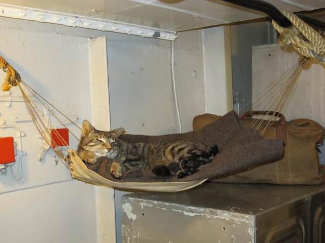 Котик член экипажа крейсера Белфаст