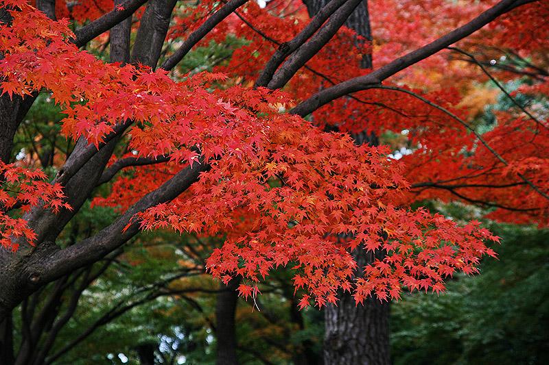 2009-Nov-Tok-Autumn50