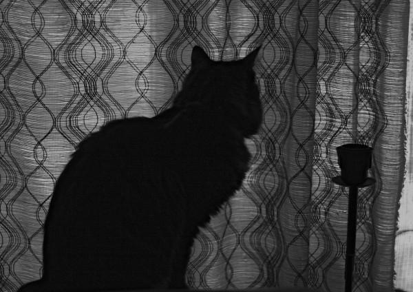 cat_dark