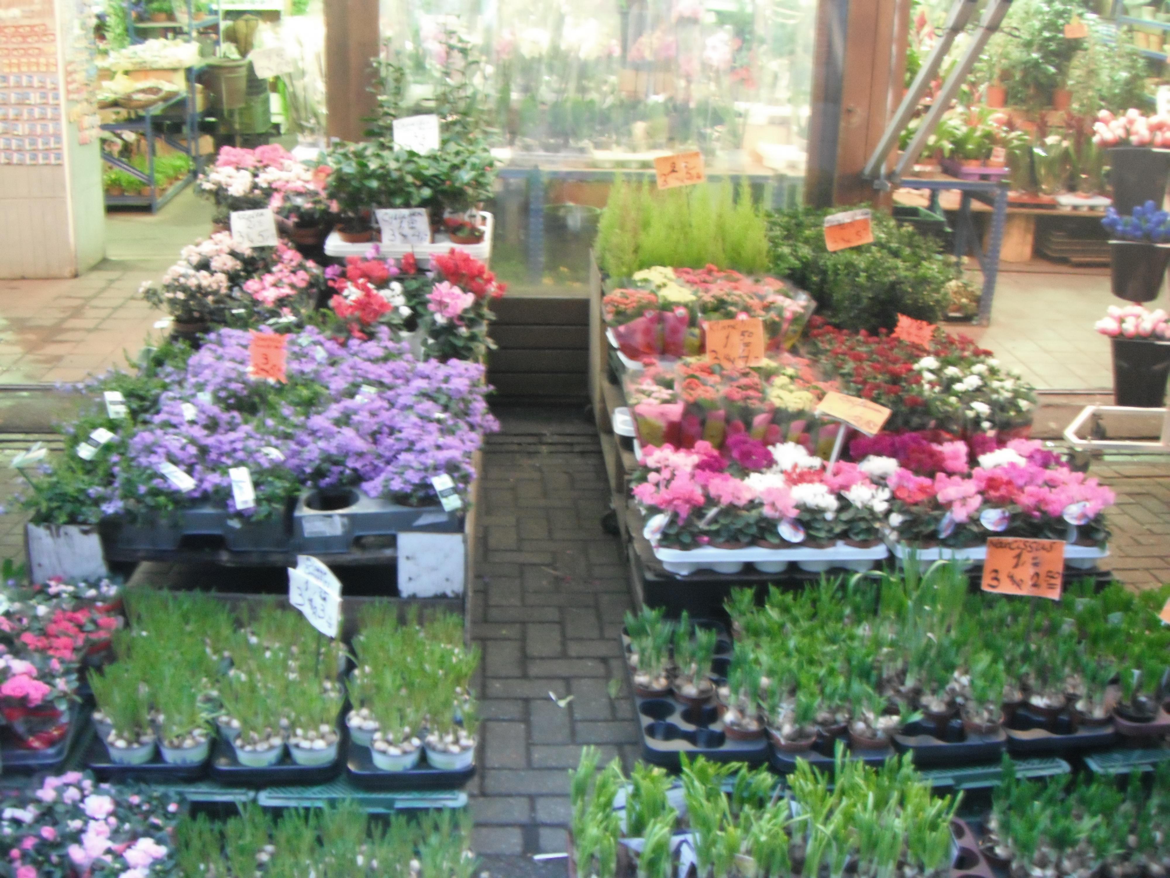 Амстердам Цветочный рынок 01.03.2012