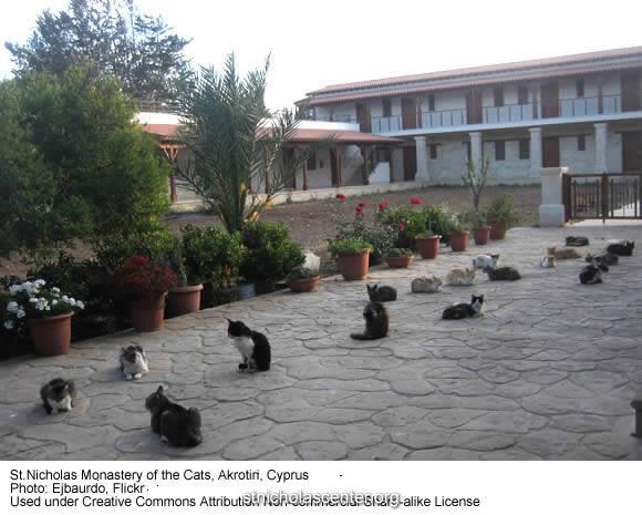 кошачий монастырь2