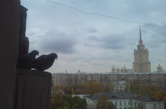 pigeons_love