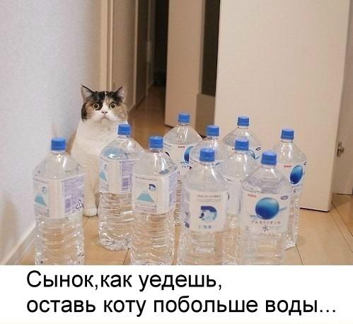 кот_вода