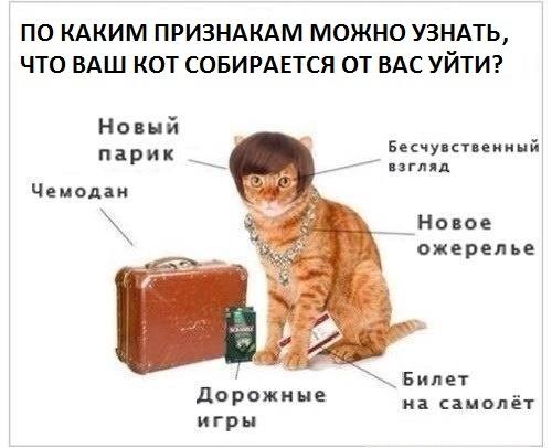 кот_уходит