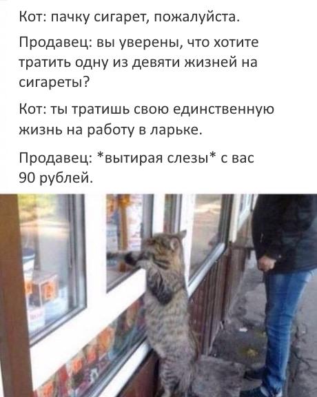 котэ-сигареты-ларек-продавец-3340771
