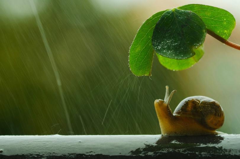 дождь-4324044