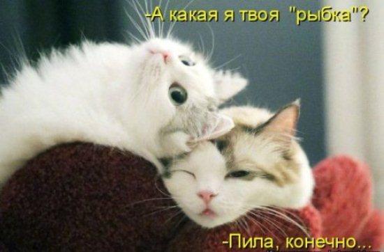 1524224752_kotomatricy-14