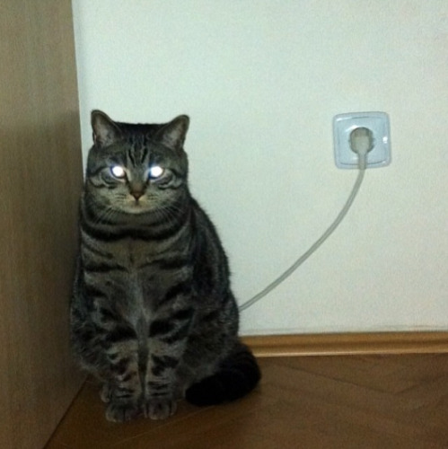 cat-charge