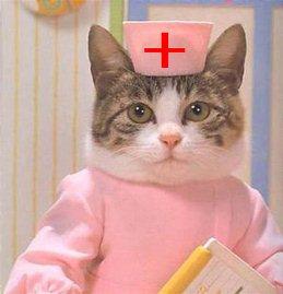 Кошка медсестра-1