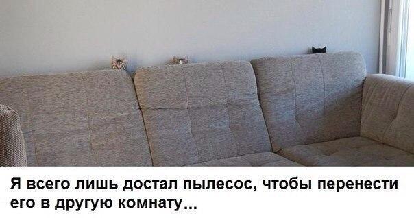 коте-диван-страх-песочница-2254024