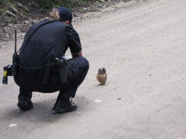 Сова-живность-полиция-2284405